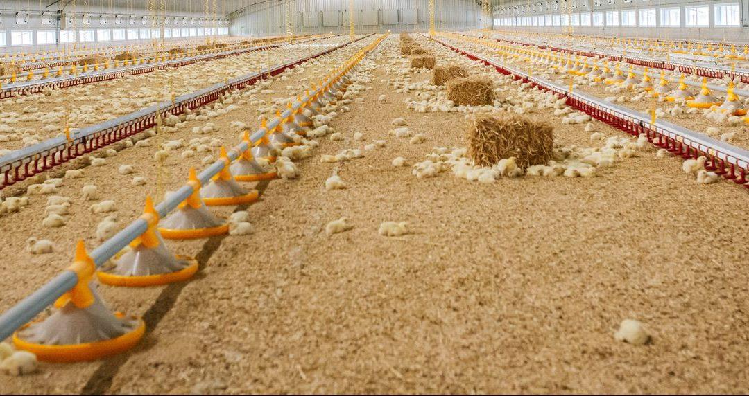 farm with hay