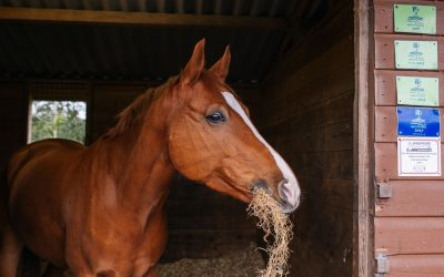 What forage do I feed my horse?